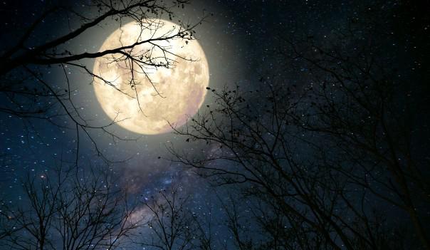 El calendario lunar y su influencia en el vino